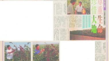 1993年(民國82年)11月 台灣時報