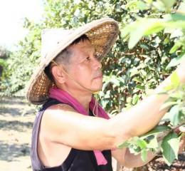 園主 - 陳坤生  the orchard owner - Mr. Chen