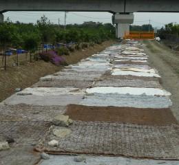 利用資源回收的床蓆作為抑制雜草生長的覆蓋物
