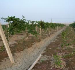 環保資材栽培架
