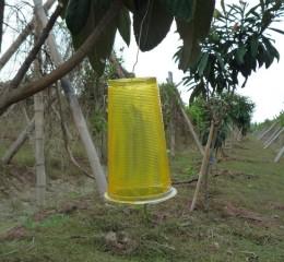 以物理性誘黏噴劑及紙板防治東方果實蠅、蒼蠅。
